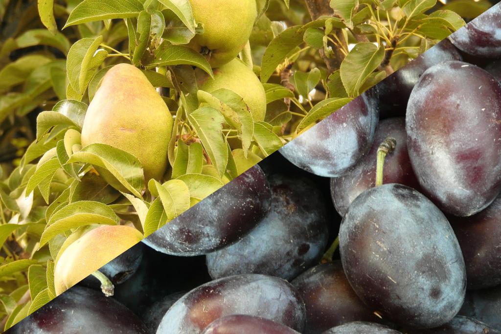 prune-poire-eaux-de-vie-tradexal-2